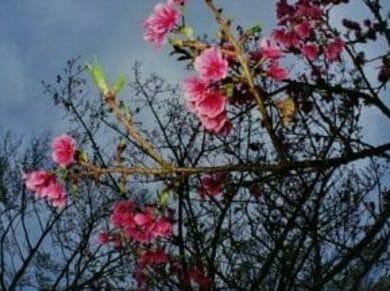 奄美大島冬の観光ホエール